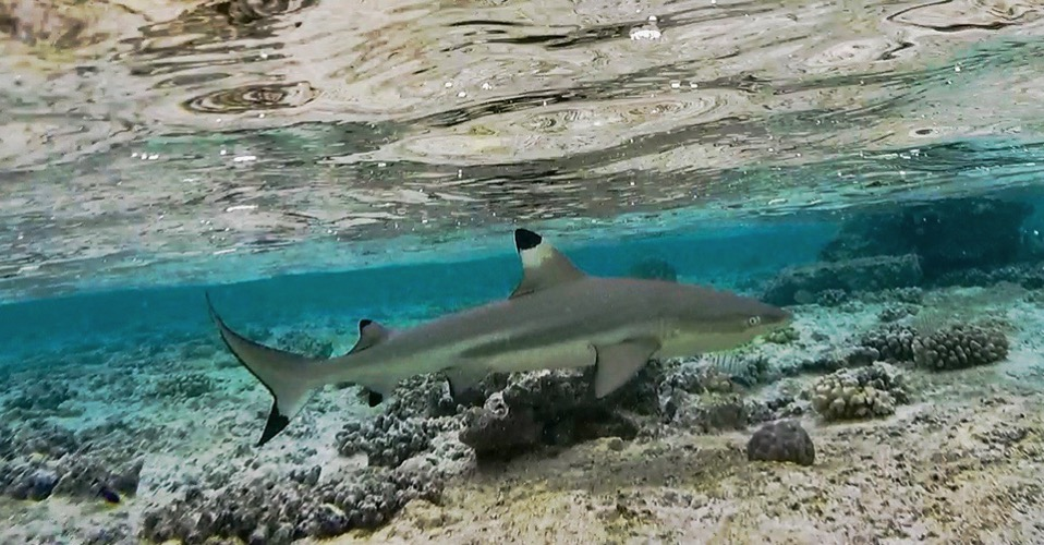RS Can t get enough of these snorkeling buddies 1